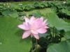 20090705_022