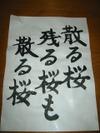 Chirusakura