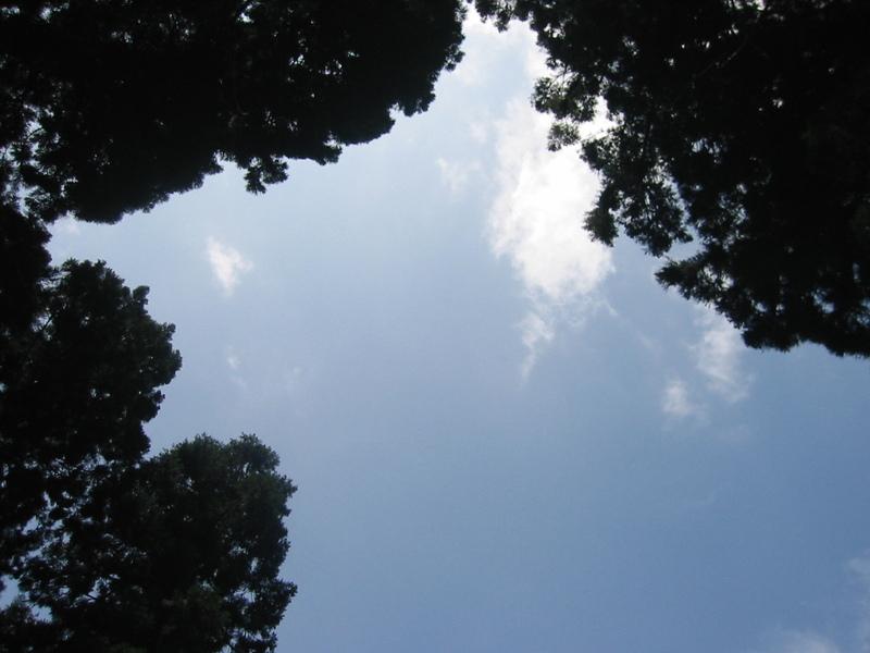 20090729_026