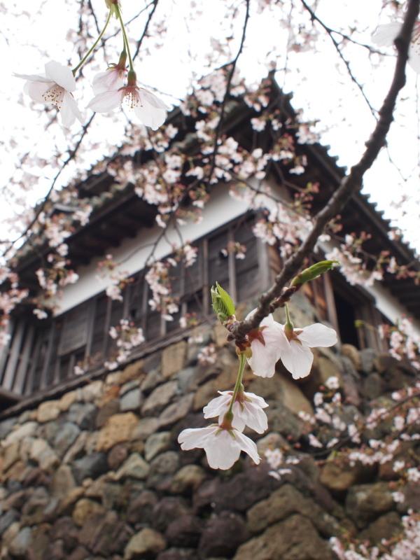 Maruokajou4