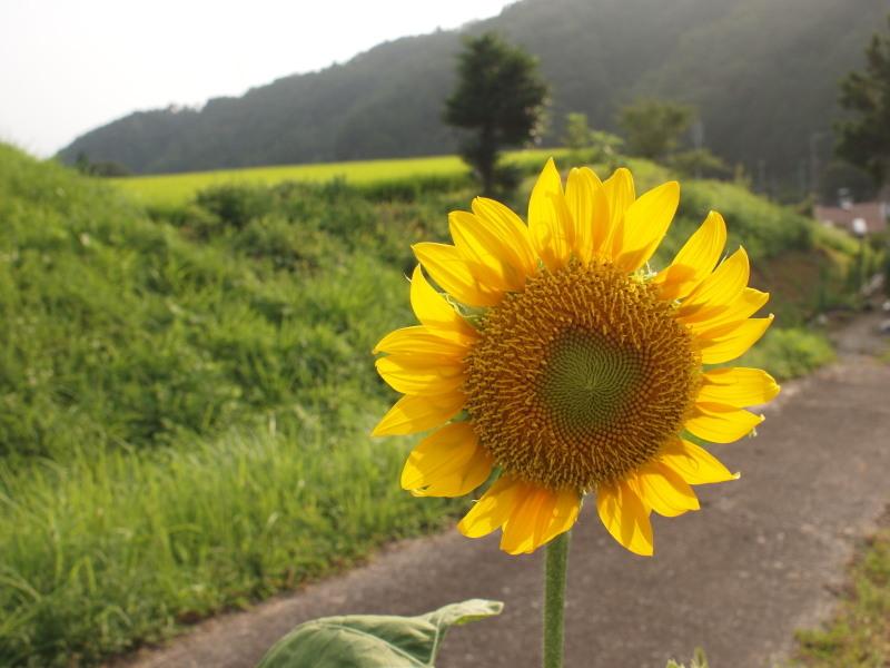 Himawari1