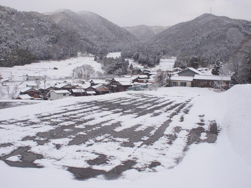 Harunoyuki2