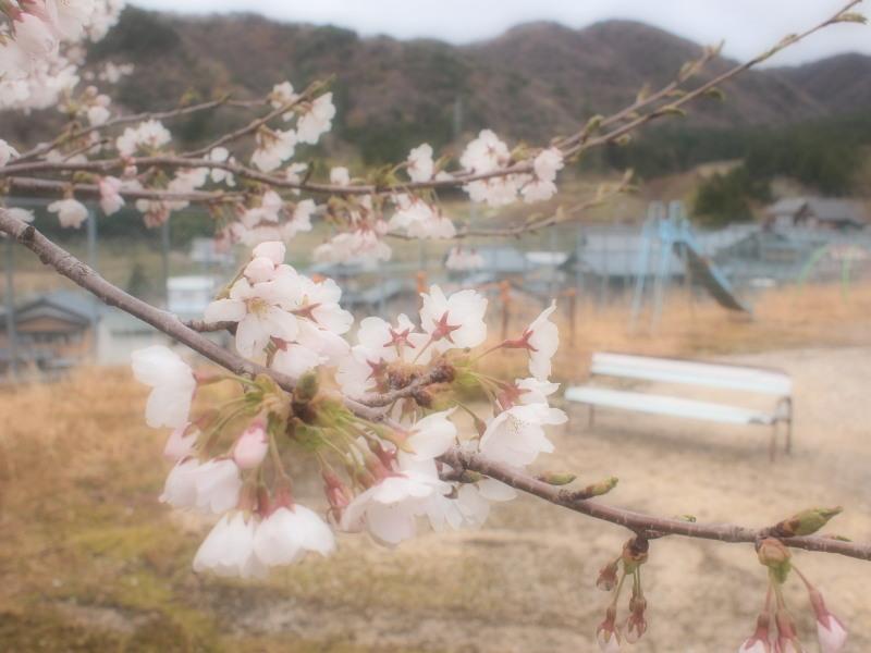 Murasakura