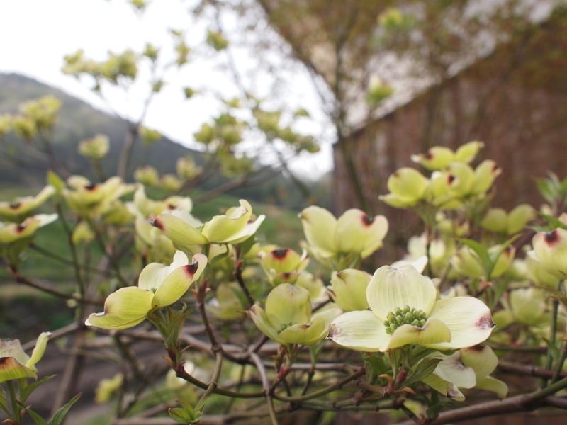 Hanamiduki01