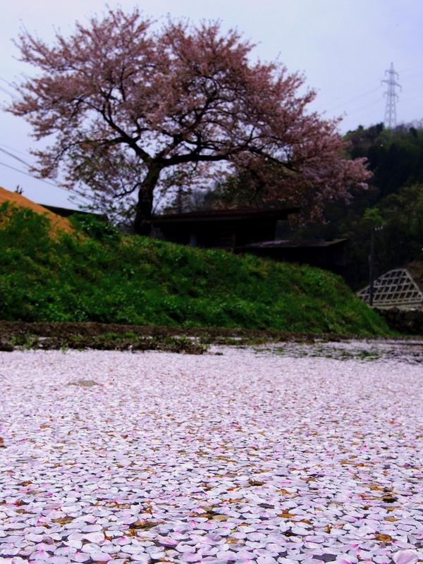 Hanaikada