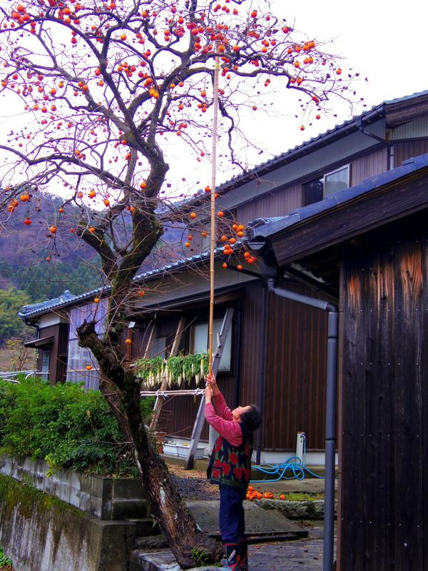 Sawasigaki1