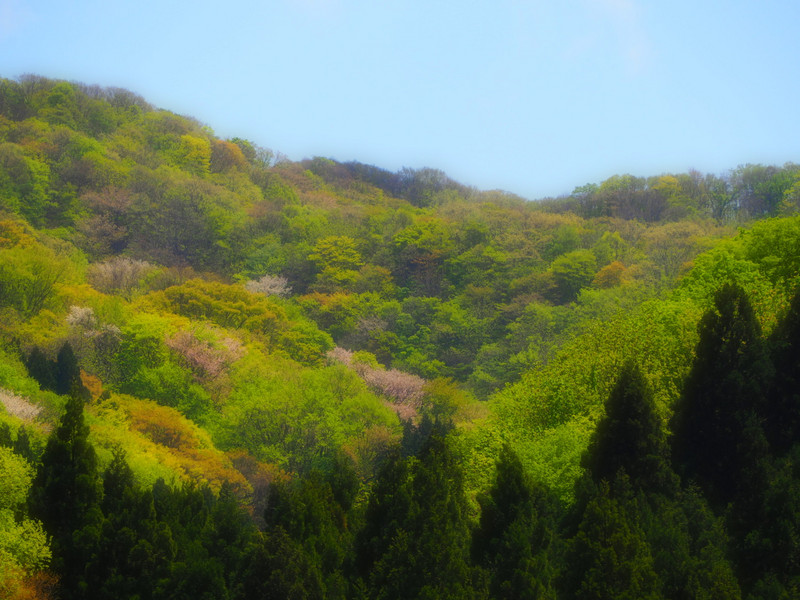 Yamawarau1