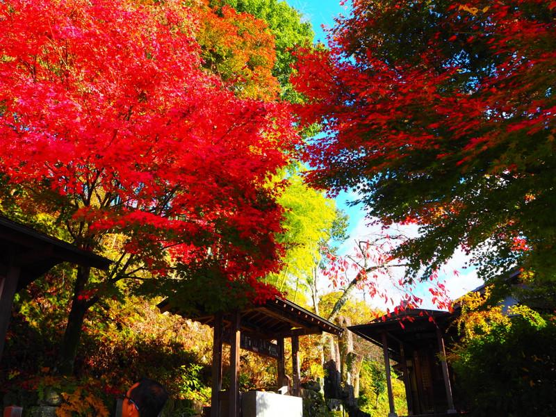 Gifu2